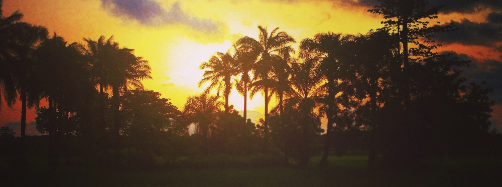 Musings from under a Mango Tree